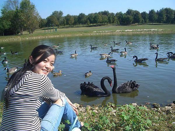看鴨、看雁、看鵝