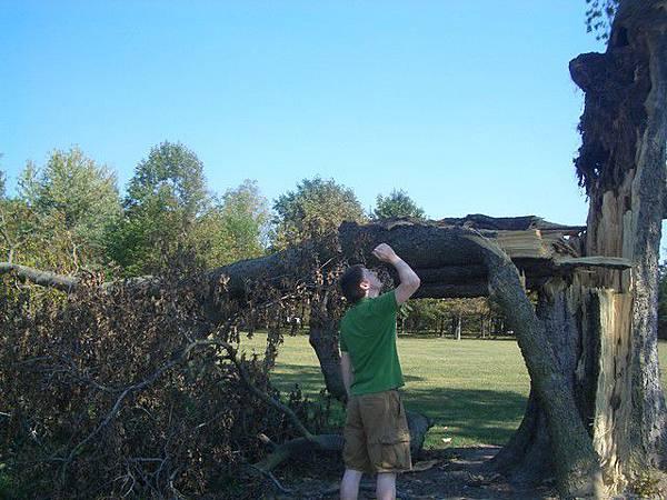 這樣的大樹