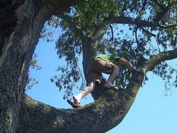 兩三下就跳到樹上