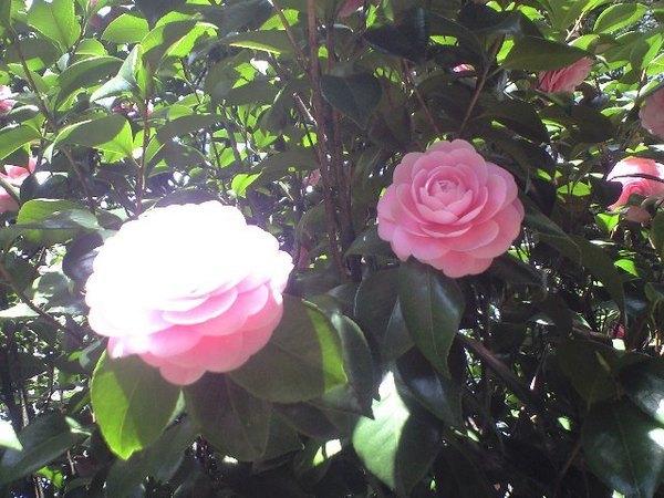 花兒享受日光浴