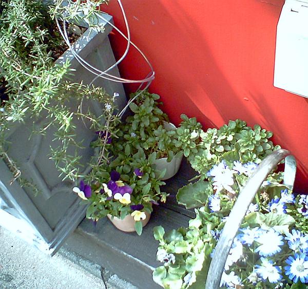 20100316-23 路邊的美麗花盆栽normal版