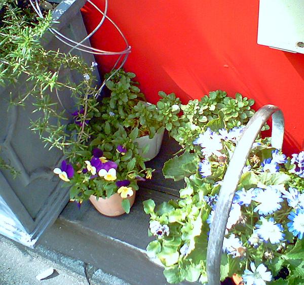 20100316-24 路邊的美麗花盆栽vivid版