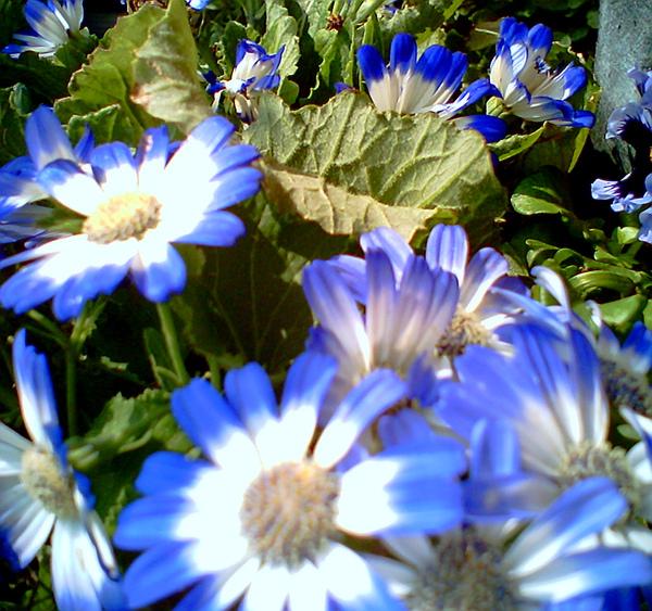 20100316-25 路邊的美麗花盆栽近照