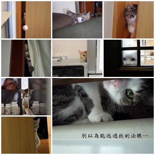 貓咪「偷窺」大集合2