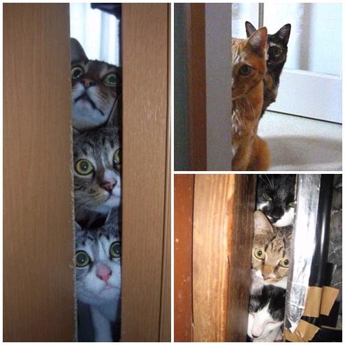 貓咪「偷窺」大集合5