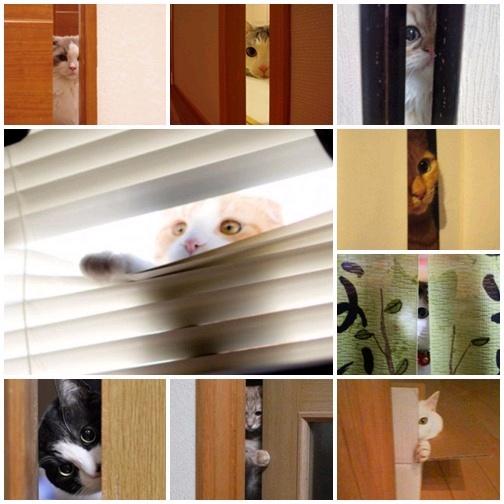 貓咪「偷窺」大集合3