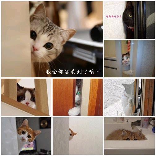 貓咪「偷窺」大集合1