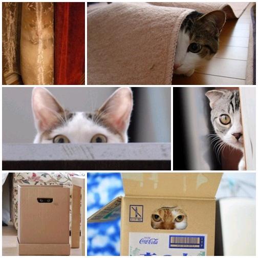 貓咪「偷窺」大集合4
