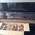 鋼琴的天敵(衣蛾大量繁殖)11