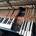 鋼琴的天敵(衣蛾大量繁殖)12