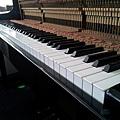 鋼琴的天敵(衣蛾大量繁殖)13