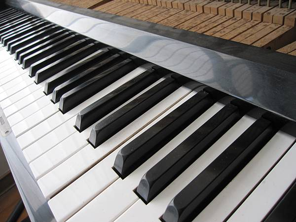 鋼琴的天敵(衣蛾大量繁殖)14