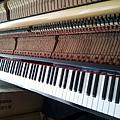 鋼琴的天敵(衣蛾大量繁殖)15
