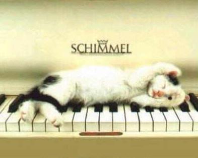 cat-piano