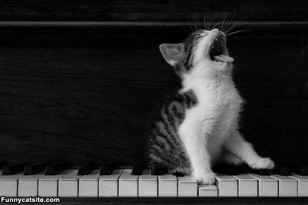 Piano_Cat657