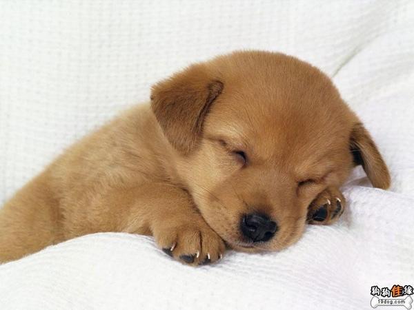 cuty dog.jpg