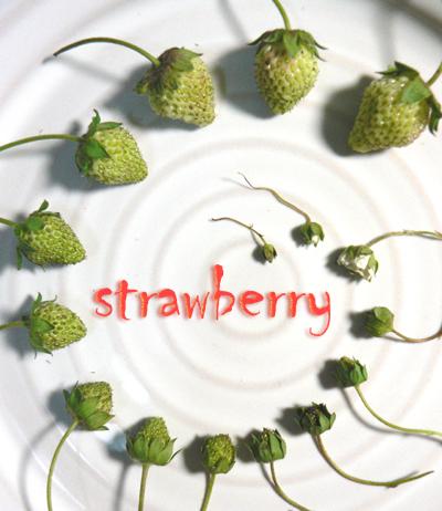 草莓小時候.jpg