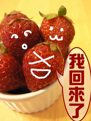 草莓上市.jpg