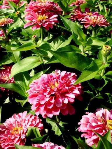 flower_6.jpg
