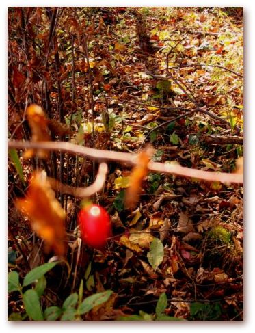 hike_66.jpg