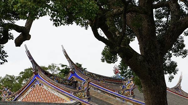 DSC07819.JPG   老樟樹與燕尾脊