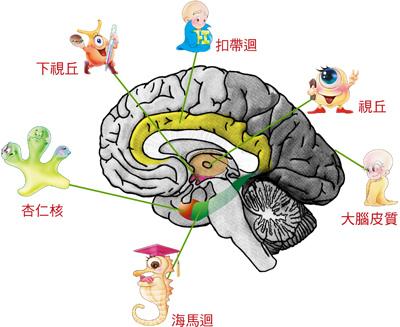 brain04.jpg