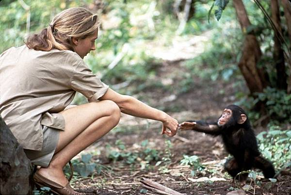 02 Dr Jane Goodall and Flint credit Hugo van Lawick for National Geographic.jpg