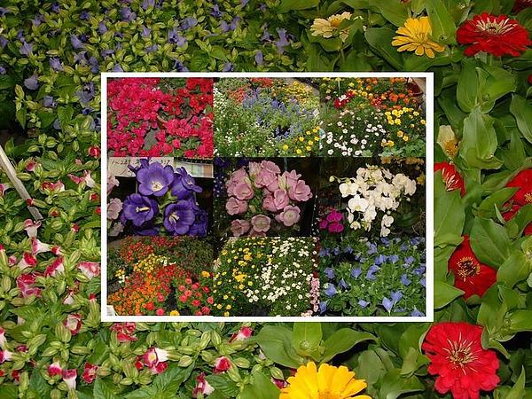 各式各樣的花朵