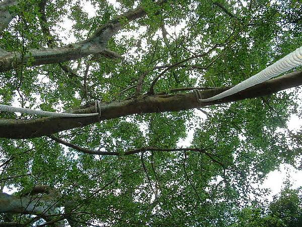 喜歡抬頭看著樹梢