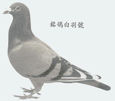 詹森白羽号 B77-6768058
