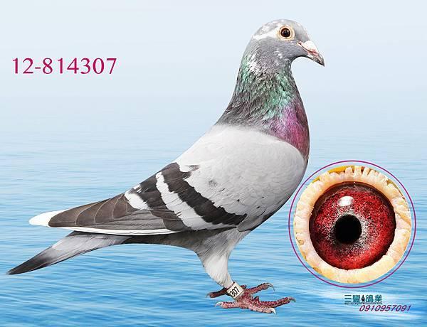 a12-814307.jpg