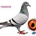 aB17-3048458.jpg