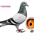 aB17-3048460.jpg