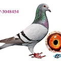aB17-3048454.jpg
