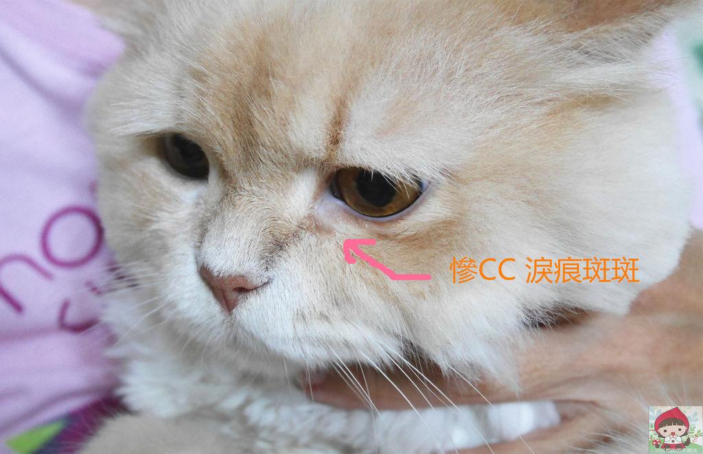 P1130551_副本.jpg