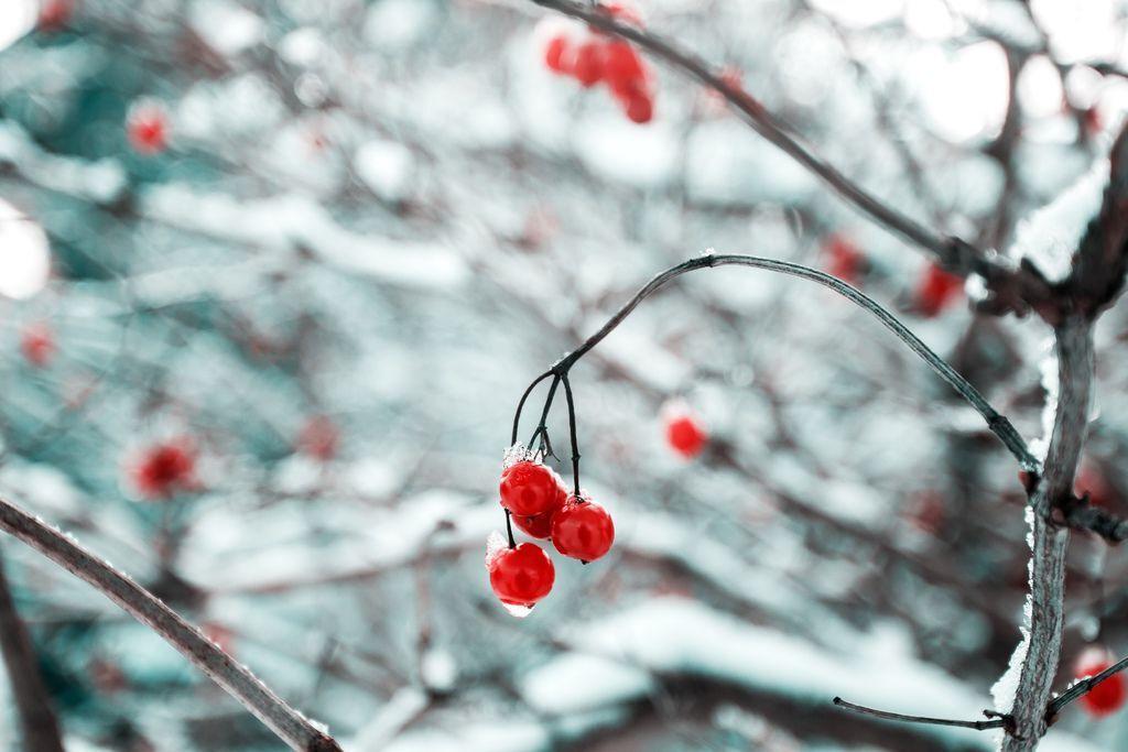 生活小常識小紅帽科普蔓越莓私密處困擾大解密01.jpg