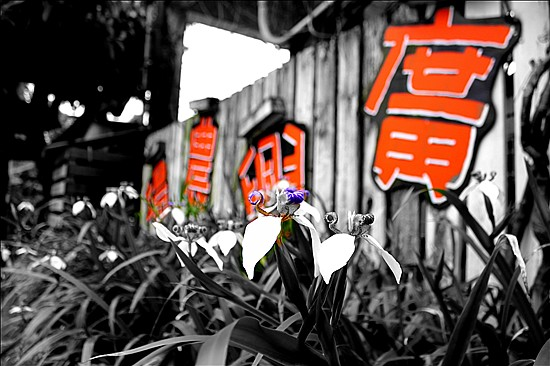 IMG_3584_副本.jpg
