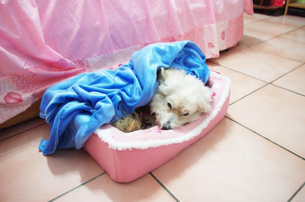 汀汀開始想念雙人床