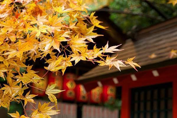 大板、京都五日