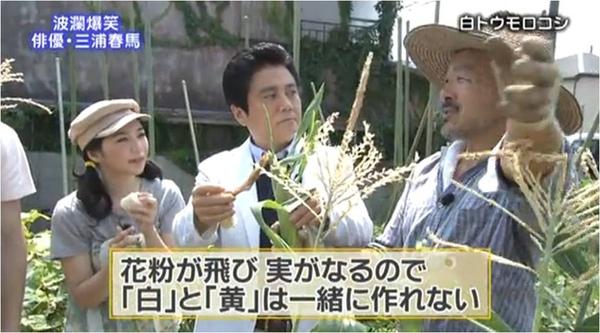 haruma_white corn_d.jpg