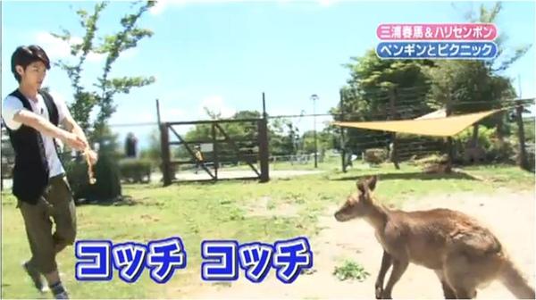 Kangaroo_4.jpg