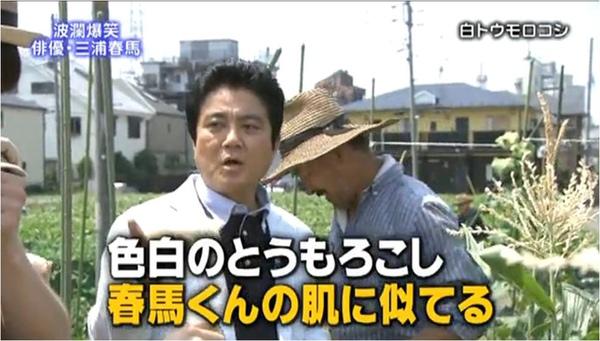 haruma_white corn_e.jpg