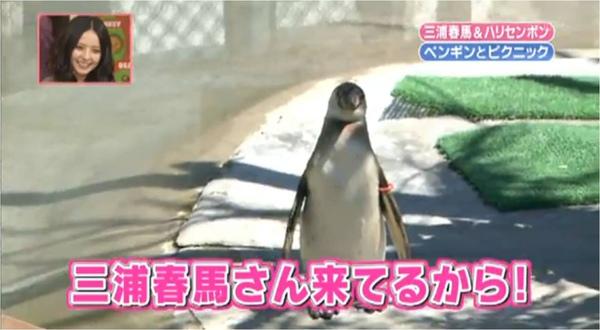 Penguin_1.jpg