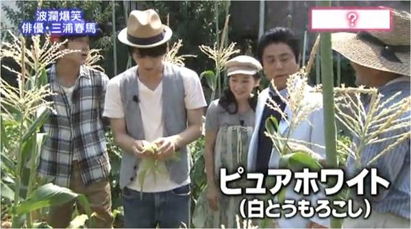haruma_white corn_a.jpg