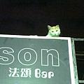 cat600.jpg
