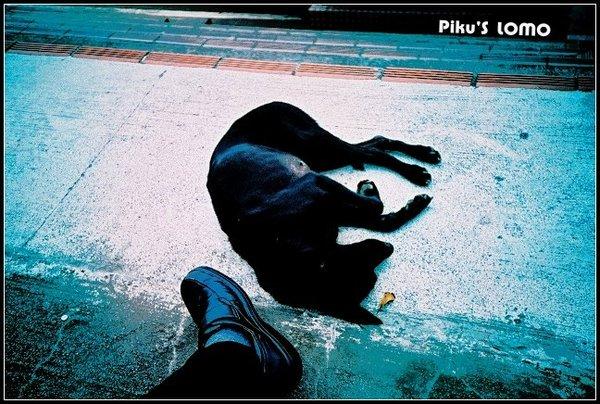 東吳大學--腳邊的狗狗