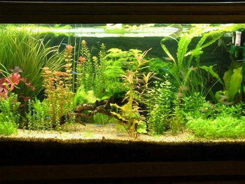 淡水--魚缸