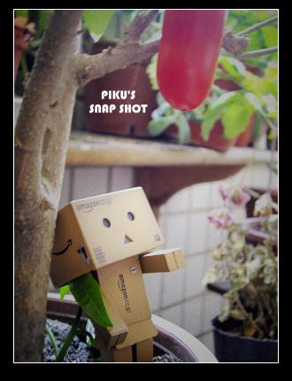 小楞蕃茄06.jpg