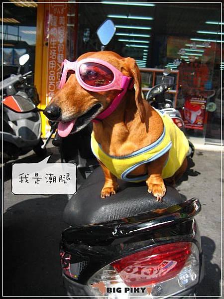 潮太陽眼鏡.10