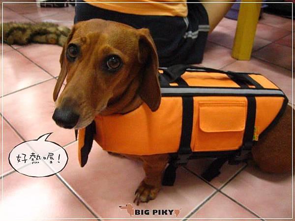 犬用救生衣.05
